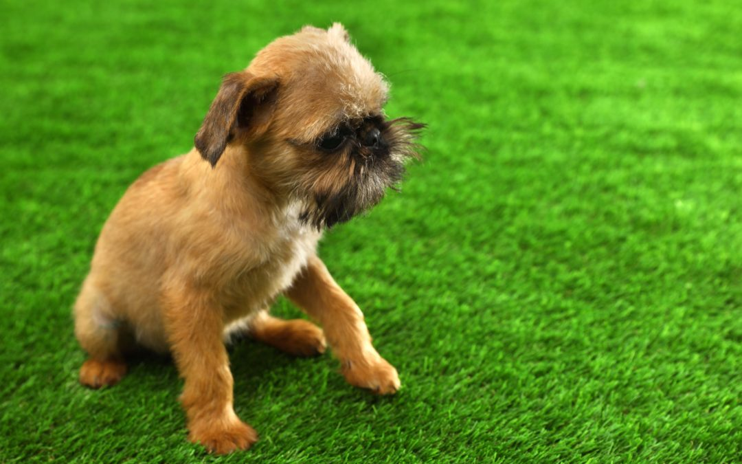 4 Signs You Need to Switch to Tough Artificial Grass for Dogs in Manteca
