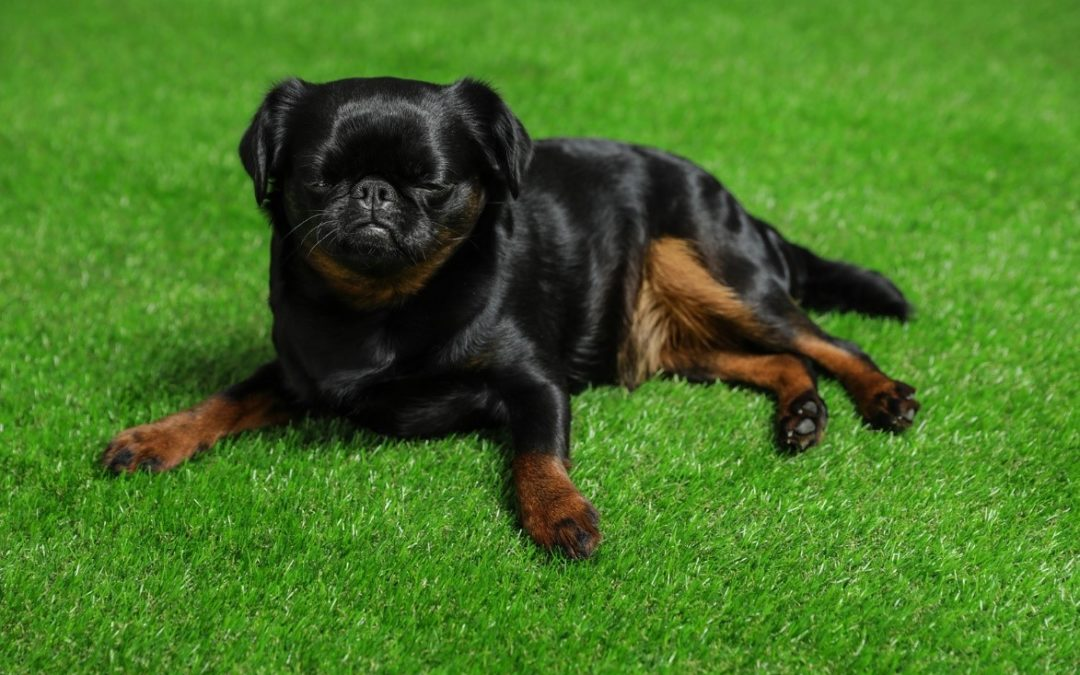 Spruce Up Your Landscapes with the Best Types of Pet-Friendly Artificial Grass for Dogs in Manteca